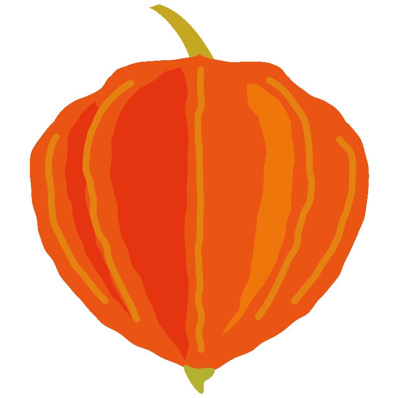 イラスト_お盆_ほおずき_オレンジ