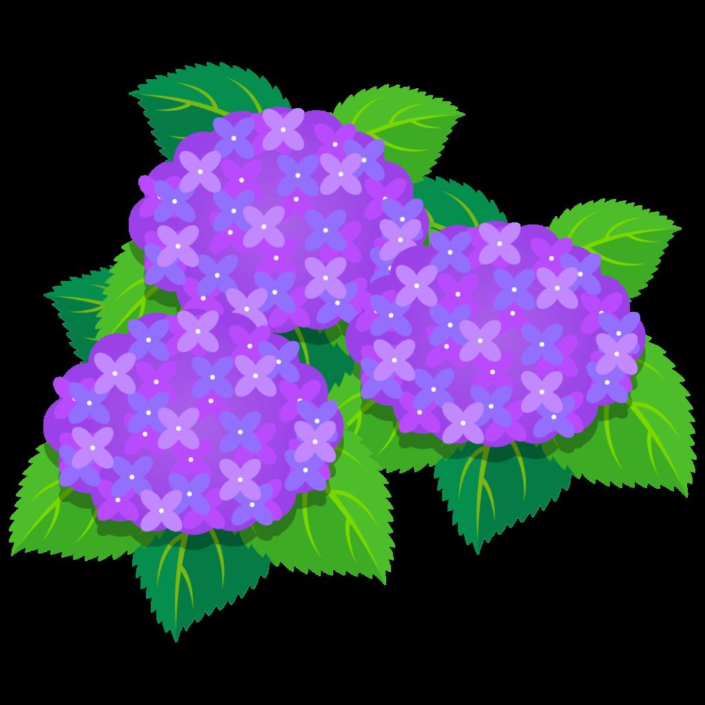 商用フリー・無料イラスト_あじさいの花(紫陽花)紫_ajisai04