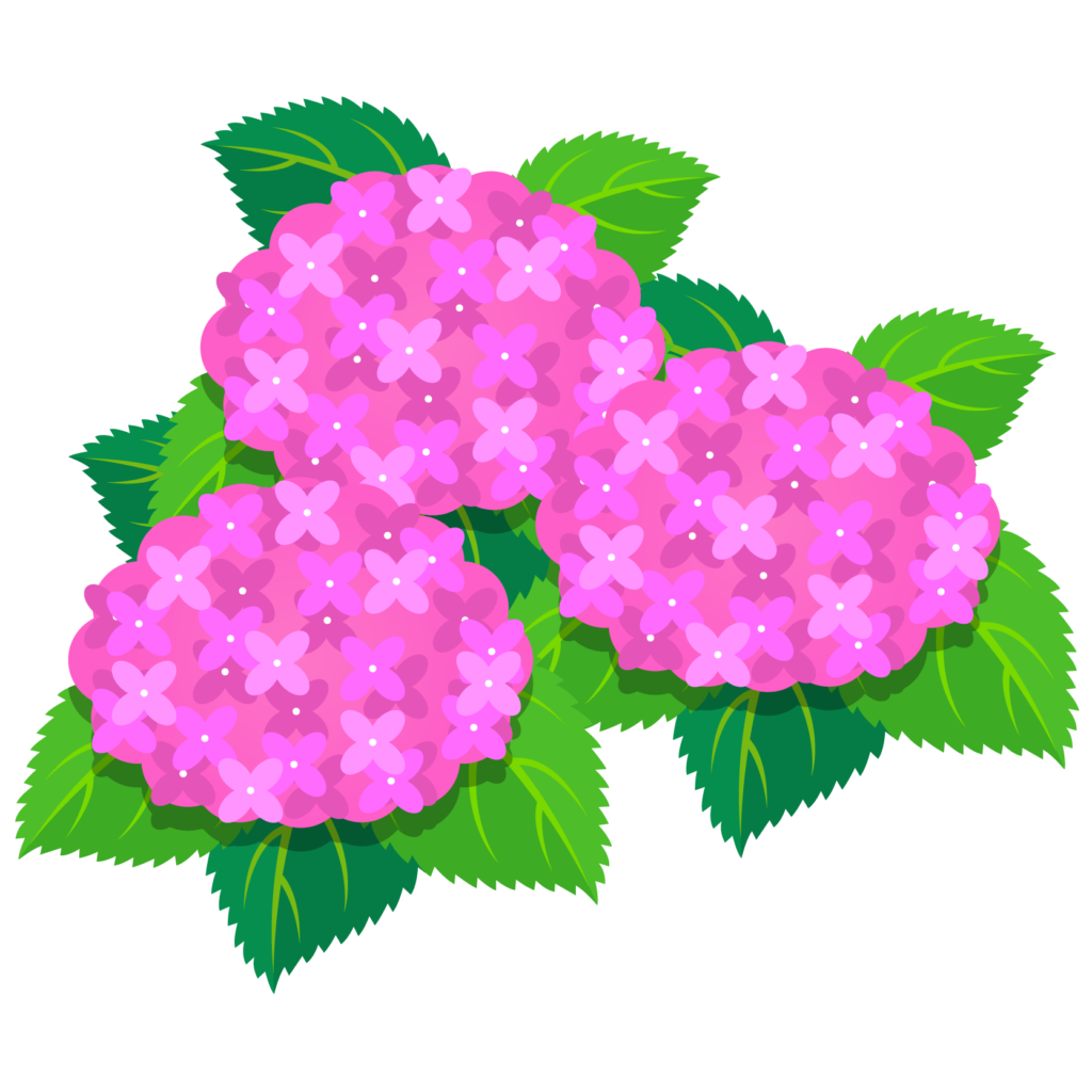 商用フリー・無料イラスト_あじさいの花(紫陽花)ピンク_ajisai05
