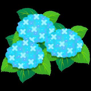 商用フリー・無料イラスト_あじさいの花(紫陽花)水色_ajisai06