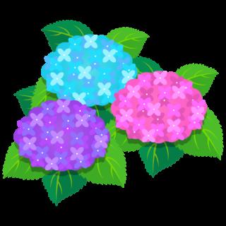 商用フリー・無料イラスト_あじさいの花(紫陽花)紫・ピンク・水色_ajisai07