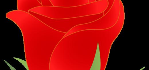 商用フリー・無料イラスト_赤いバラの花_rose02