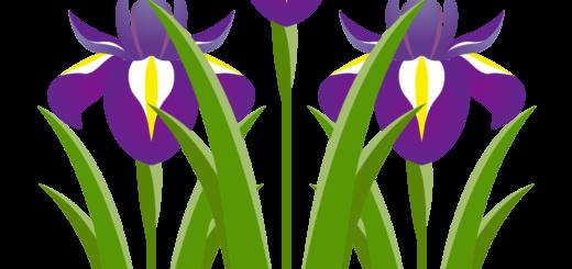 商用フリー・無料イラスト_5月端午の節句_菖蒲(しょうぶ、あやめ)の花_tangonosekku45