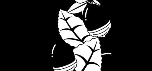 商用フリー・無料イラスト_秋_落ち葉とどんぐり_白黒イラスト_autumn076