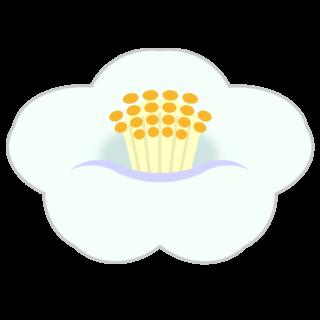 商用フリー・無料イラスト_白い椿(つばき)の花のイラスト_tsubaki004