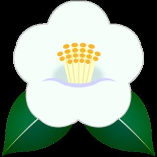 商用フリー・無料イラスト_白い椿(つばき)の花のイラスト_tsubaki011