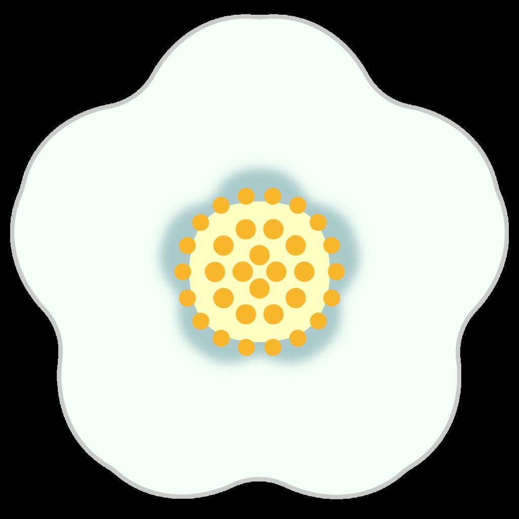 商用フリー・無料イラスト_白い椿(つばき)の花のイラスト_tsubaki020