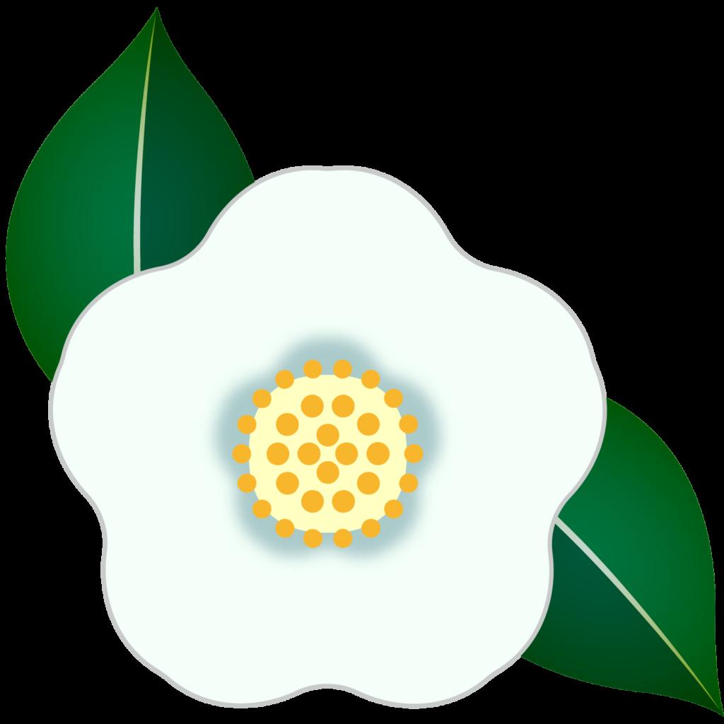 商用フリー・無料イラスト_白い椿(つばき)の花のイラスト_tsubaki022