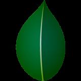 商用フリー・無料イラスト_椿(つばき)の葉のイラスト_tsubaki027