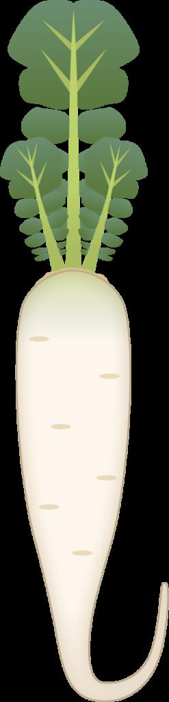 商用フリー・無料イラスト_春の七草・蘿蔔(すずしろ・suzushiro)nanakusa001