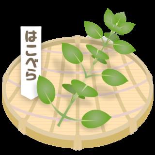商用フリー・無料イラスト_ざるに盛った春の七草・繁縷(はこべら・hakobera)nanakusa015