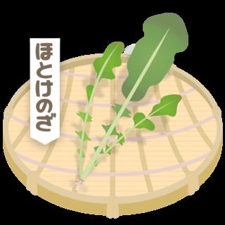 商用フリー・無料イラスト_ざるに盛った春の七草・仏の座(ほとけのざ・hotokenoza)nanakusa016