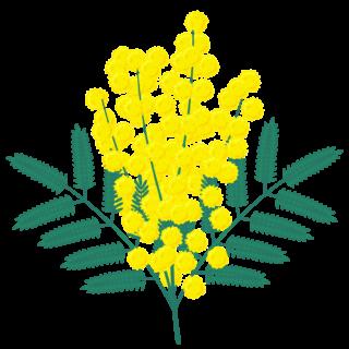 商用フリー・無料イラスト_ミモザの花のイラスト_MimosaIllustration002