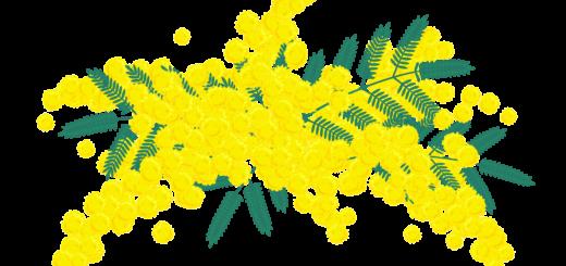 商用フリー・無料イラスト_ミモザの花のイラスト_MimosaIllustration003