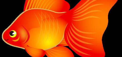 商用フリー・無料イラスト_金魚のイラスト(琉金・リュウキン)_kingyo_Goldfish001